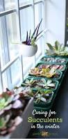 101 best indoor gardening images on pinterest indoor gardening