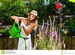 flowers in garden images woman gardener watering flowers in garden stock images image