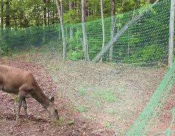 cheap garden fence ideas deer netting click pic for 25 garden