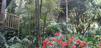 small native plants for australian gardens best hedging small garden bamboo the bello bamboo company