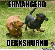 Ermahgerd Animal Memes - ermahgerd derkshurnd by shinycharizard meme center