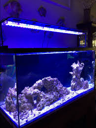 sb reef lights review new mixed reef tank in the woods reef2reef saltwater and reef