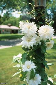 best 25 florida flowers ideas on pinterest front of house