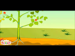 what is photosynthesis in plants class 3rd class 4 grade 3 grade