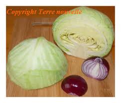 cuisiner un chou vert choux vert et oignon terre nouvelle