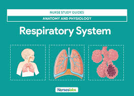 Anatomy And Physiology Of Lungs Respiratory System Anatomy And Physiology U2022 Nurseslabs