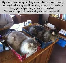 Working Cat Meme - the cat traps are working it s funny cause its true pinterest