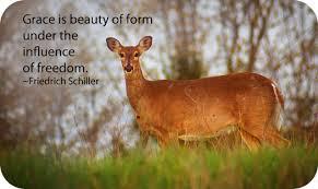 symbolism of the deer