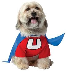 Pet Cat Halloween Costumes 20 Absolutely Amazing Dog Halloween Costumes Style Motivation
