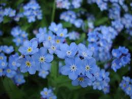 photobucket the best spring flowers photobucket