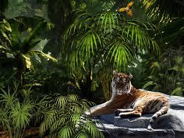 tiger jungle hd windows wallpapers