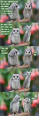 Funny Owl Meme - funny owls