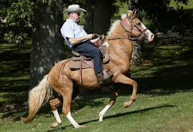 Alabama how far can a horse travel in a day images Alabama republicans bet on roy moore a familiar rebel for senate jpg
