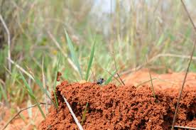 startling information about the different types of ants