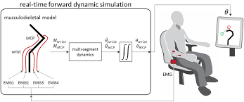 musculoskeletal model based control interface mimics physiologic