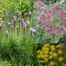 plants native to illinois 5 native plants we love for illinois commercial landscapes