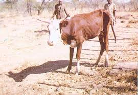 Diseases Caused By Protozoa In Plants - manual on meat inspection for developing countries