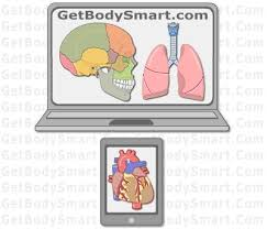 Human Anatomy And Physiology Courses Online Best 25 Human Anatomy And Physiology Ideas On Pinterest