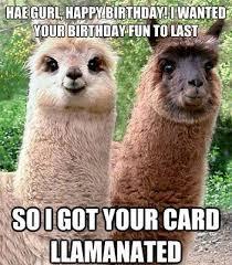 Funny Animal Birthday Memes - fancy funny animal birthday memes best 25 funny birthday quotes