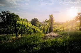 10 beautiful wineries near st louis you must visit
