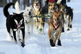 Bucketlist  Go on a dog sledding expedition ficial Bucket List