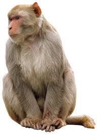 46 stocks at monkey images group