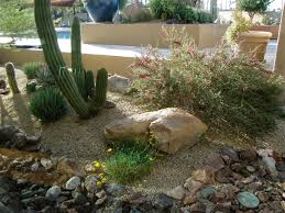 desert landscaping ten tips for winter watering water use it wisely