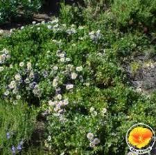 100 best mediterreanan garden ideas images on pinterest back