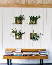 decorative house plants szfpbgj