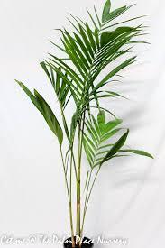 the palm place nursery u2013 palms tropical plants grass trees and