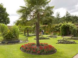 wonderful front yard landscaping ideas with palm trees images