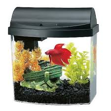 Buying a Proper Betta Tank