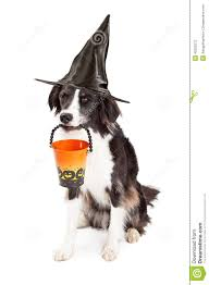 border collie witch halloween dog stock photo image 45202273