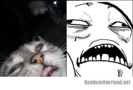 Jesus Cat Meme - this cat totally looks like sweet jesus meme randomoverload