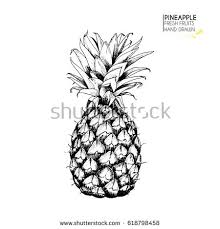 pineapple sketch stock illustration 374109028 shutterstock