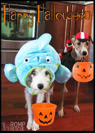Funny Animal Halloween Costumes 133 Dog Halloween Costumes Images Animals Dog