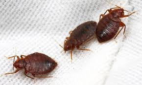Can Bed Bugs Survive Outside Bed Bug