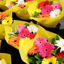 gerbera colors gerbera blooms for special events gerbera gerbera daisies