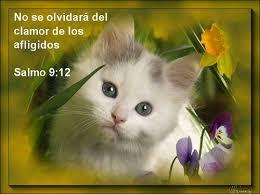 imagenes jw org es tarjetas con textos bíblicos flickr