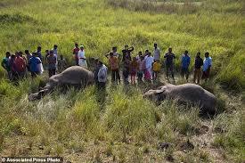 india passenger train hits and kills 2 asian elephants daily