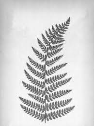 drawn fern simple pencil and in color drawn fern simple