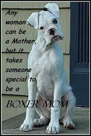 boxer dog sayings 25 best boxer dogs ideas on pinterest boxer baby boxer puppies