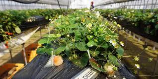 the smart garden cherise fong makery