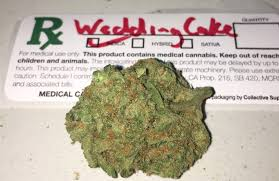 wedding cake genetics wedding cake marijuana strain reviews allbud