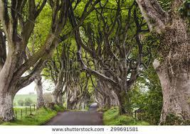 majestic tree alley trees stock photo 299691569