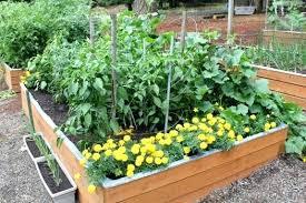 pacific northwest gardening blog pacific northwest gardening forum