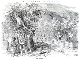 the elm and the vine