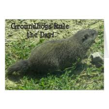groundhog day cards groundhog day cards invitations greeting photo cards