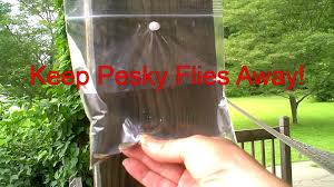 Backyard Fly Repellent Keep Those Pesky Flies Away From Picnic Areas Easy Home Remedy