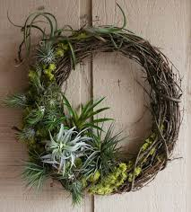 air plants and succulents a perfect pair
